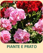 03 piante e prato